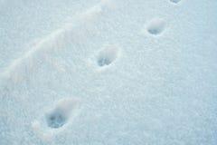 снежок следов ноги свежий Стоковое Фото