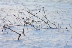снежок травы ветвей Стоковая Фотография