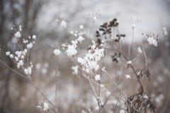 снежок травы вниз Стоковая Фотография RF