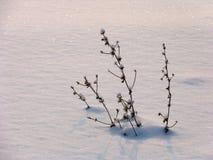снежок травы Стоковые Фотографии RF