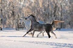 снежок 2 лошадей Стоковое фото RF