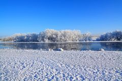 снежок bushes Стоковое Фото
