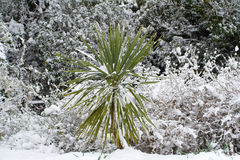 снежок cordelyne Стоковое Изображение