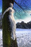снежок dryad Стоковые Фото