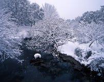 снежок sakura Стоковые Изображения RF