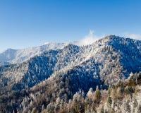 снежок smokies держателя leconte Стоковая Фотография