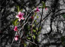 Снимок красивых цветков во время моей прогулки в этой весной дне в парке стоковые фото