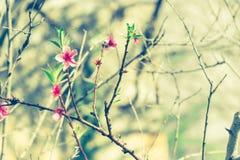 Снимок красивых цветков во время моей прогулки в этой весной дне в парке стоковое изображение
