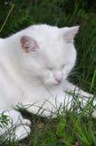 сновидение кота имеет сны молока белые стоковые фото