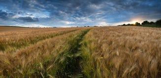 Сногсшибательное пшеничное поле ландшафта сельской местности в заходе солнца лета стоковая фотография rf