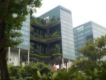 Сногсшибательные сады приостанавливанные в воздухе на улицах Сингапура стоковые изображения
