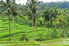 Сногсшибательный взгляд на зеленых террасах риса в Бали Стоковое фото RF