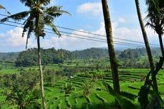 Сногсшибательный взгляд на зеленых террасах риса в Бали Стоковые Изображения RF