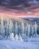 Сногсшибательный восход солнца зимы в прикарпатских горах с cowere снега Стоковое Изображение RF