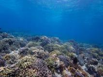 Сногсшибательная верхняя часть рифа на острове 02 Menjangan Стоковые Изображения RF
