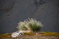 Сногсшибательная красота ландшафтов Godthul стоковое фото