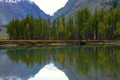 Сногсшибательное отражение деревьев Стоковые Изображения RF