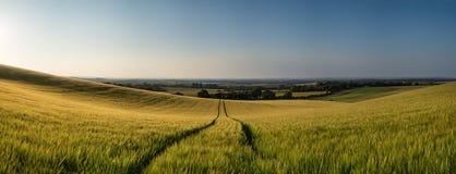 Сногсшибательное пшеничное поле ландшафта панорамы сельской местности в лете su Стоковое Фото