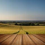 Сногсшибательное пшеничное поле ландшафта сельской местности в заходе солнца лета с Стоковые Изображения