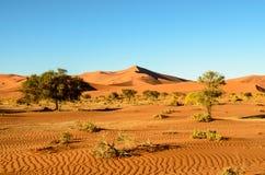 Сногсшибательный взгляд песчанных дюн Намибии Стоковые Изображения