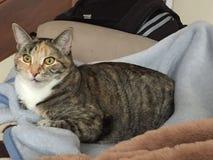 Сногсшибательный женский кот Tabby стоковое фото rf