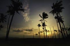 Сногсшибательный заход солнца восхода солнца на береговой линии изображение силуэта кокосовой пальмы Стоковое Изображение