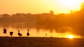 Сногсшибательный силуэт восхода солнца стоковые изображения rf