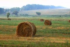 снопы сена Стоковая Фотография