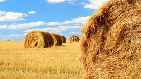 Снопы сена Стоковое Изображение