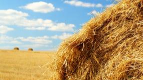 Снопы сена Стоковые Фотографии RF