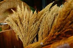 Сноп пшеницы Стоковое Фото