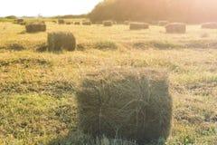 Сноп сена, сбора аграрных полей в осени Стоковые Фото