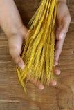 Сноп ушей пшеницы Стоковая Фотография