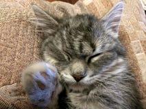 Сны кота Стоковое Фото