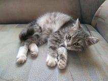 Сны кота Стоковые Фото