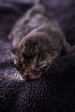 Сны одного котенка tabby дня старые стоковые фото