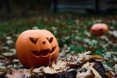 Снятый головы jack тыквы хеллоуина Стоковое Изображение