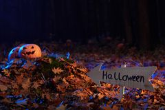 Снятый головы jack тыквы хеллоуина Стоковое Изображение RF