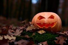Снятый головы jack тыквы хеллоуина Стоковые Фотографии RF
