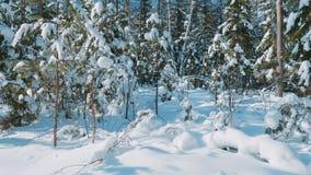 Снятый леса зимы и покрытых снег деревьев видеоматериал