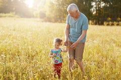Снятый серых с волосами мужских прогулок через злаковик с его внучкой, выберите вверх wildflowers, насладитесь красивой солнечнос стоковые фотографии rf