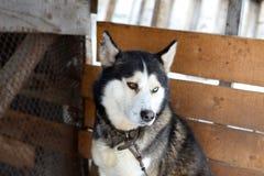 Собака лайки доброты Стоковая Фотография RF