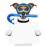 Собака акваланга стоковое фото
