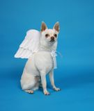 собака ангела Стоковые Изображения