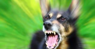 Собака лаять стоковое изображение rf