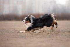 Собака бежать и играя в парке стоковое фото rf