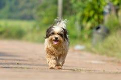 Собака бежать или идя на дорогу Стоковая Фотография RF