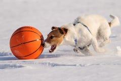 Собака бежать с шариком баскетбола на высокой скорости Стоковые Изображения RF