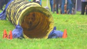 Собака бежит внутри тоннеля акции видеоматериалы