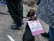 Собака бигля носит политический знак анти--козыря Стоковое Изображение